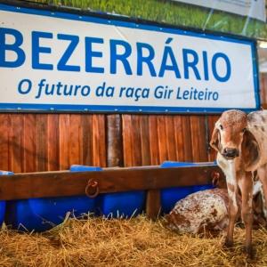Bezerrário Gir Leiteiro2