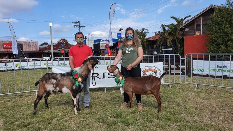 Caprinos da raça Anglo-nubiana da Cabanha Che Piá, de Morro Reuter, são campeões da Expointer