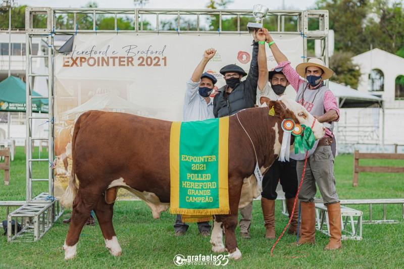 Grande Campeão Polled Hereford da Fazenda Mãe Rainha, de Lages/SC